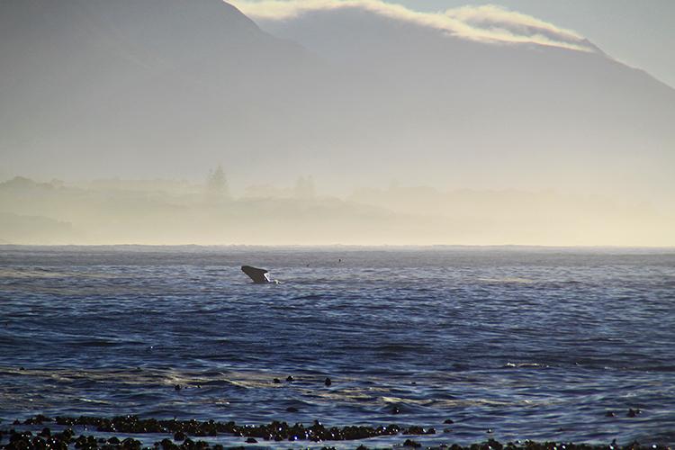 Whale Season 2