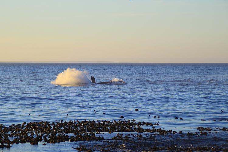 Whale Season 7